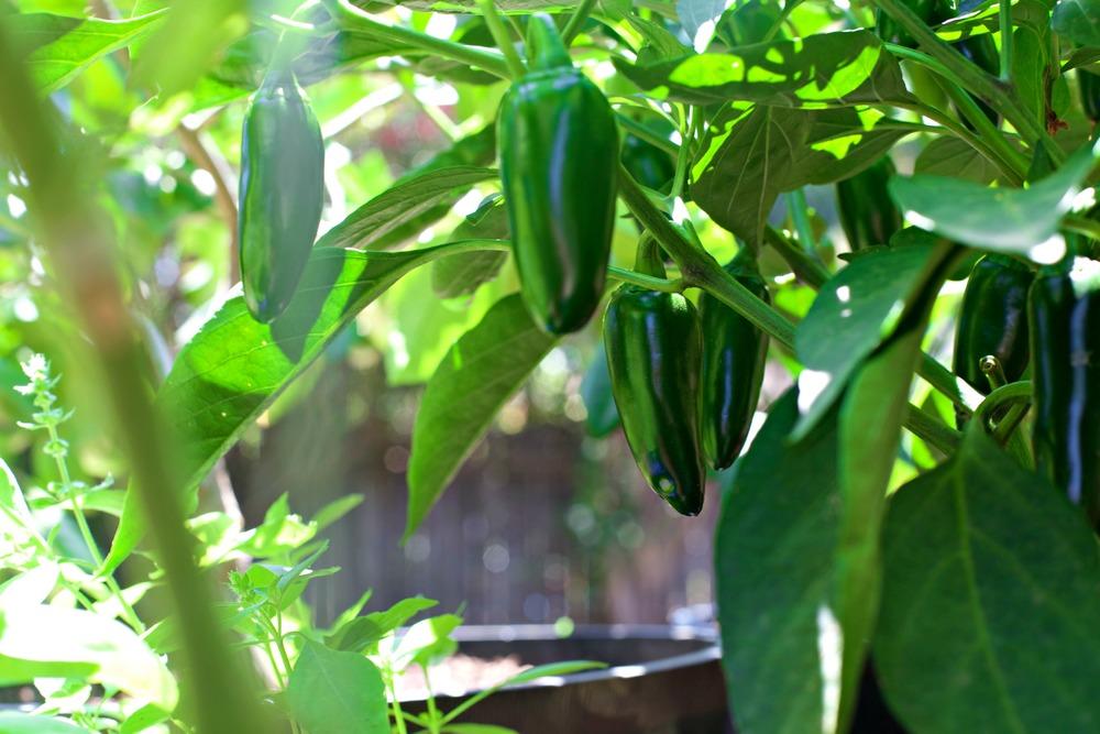 Part 4: Three Ways to Maintain your Sustainable Garden
