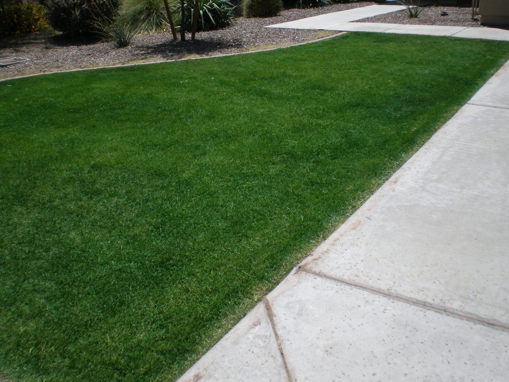 Why You Should Paint Your Lawn Green to Save Water
