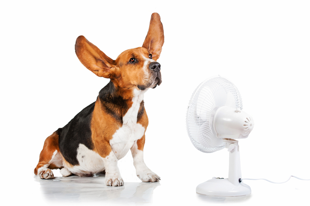 3 Tips for Staying Cool & Saving Money on Air Conditioning this Summer